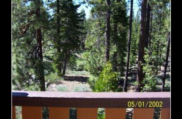 Wooded View From Deck